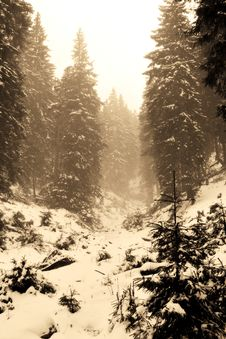 Free Sepia Forest Royalty Free Stock Photo - 1740535