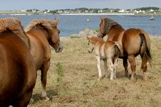 Free A Herd Of Horses Near Sea Stock Photos - 1749203