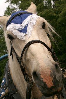 Free Portrait Of Horse Stock Image - 1749581