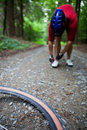 Free Mountain Biking In A Forest Royalty Free Stock Photos - 17403368
