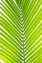Free Palm Leaf In Detail Royalty Free Stock Photos - 17408378
