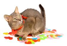 Free Cat Sitting On Multicolored Paper Hearts Royalty Free Stock Image - 17400696
