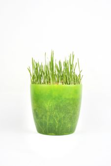 Free Green Grass Royalty Free Stock Photography - 17400907