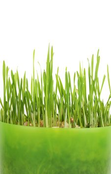 Free Green Grass Stock Photography - 17400912