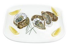 Free Oyster Royalty Free Stock Image - 17404996