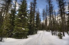 Free Winter Trail Through The Woods Royalty Free Stock Photography - 17405157