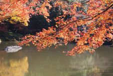 Free Autumn Leaf  And Lake Royalty Free Stock Photography - 17405297