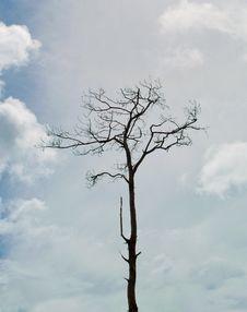 Free Dead Pine Tree Royalty Free Stock Photos - 17406238