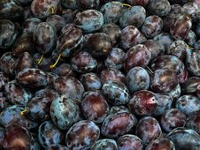 Free Fresh Plums Stock Image - 17406631
