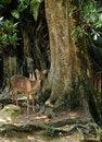 Free Deer Under Tree Royalty Free Stock Photos - 17418558