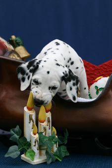 Christmas Dalmatian Puppy And Candles Royalty Free Stock Images