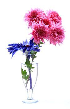 Free Fresh Flowers Royalty Free Stock Image - 17416846