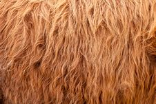 Cow Hair Full Frame Stock Photo