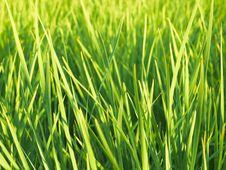 Free Green Grass 02 Stock Photos - 17418563