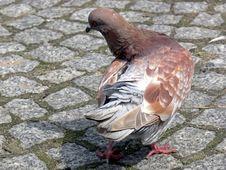 Free Dancing Dove Royalty Free Stock Image - 17418926