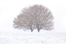 Free Winter Royalty Free Stock Photography - 17419827