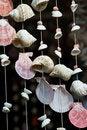 Free Seashell Mobile Stock Photos - 17425613