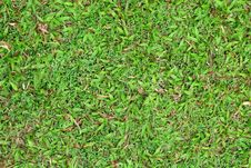 Free Grass Background Royalty Free Stock Photo - 17420765
