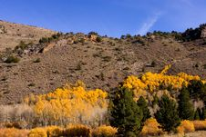 Free Fall Colors In The Eastern Sierra Stock Photography - 17422552