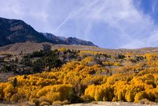 Free Fall Colors In The Eastern Sierra Royalty Free Stock Photos - 17422558