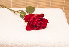 Free Red Roses Stock Image - 17424841