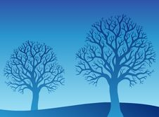 Free Two Blue Trees Stock Photography - 17426302