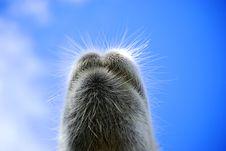 Free Camel Royalty Free Stock Photos - 17426558