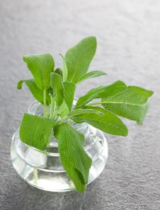 Free Sage In A Glass Stock Images - 17427724