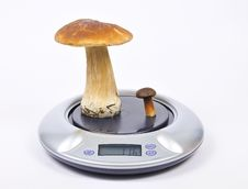 Free Mushrooms On Kitchen Scales Royalty Free Stock Image - 17428026