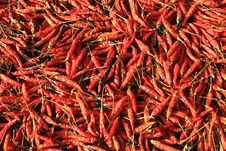 Dried Red Chilies Stock Image