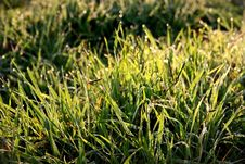 Free Dewdrops On Grass Royalty Free Stock Photos - 17428468