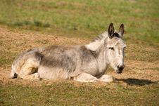 Free Donkey Stock Images - 17428734