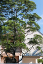 Free Pine Tree And House Royalty Free Stock Photography - 17433937
