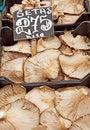 Free Mushrooms Royalty Free Stock Image - 17434116