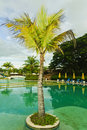 Free Coconut Tree Royalty Free Stock Images - 17435459