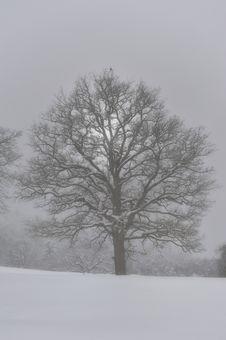 Free Winter Crow Stock Photo - 17430720