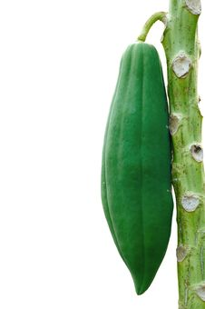 Free The Papaya Tree On A White Background. Stock Image - 17431161