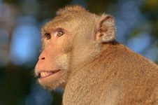 Free Closeup The Faces Of Monkeys Royalty Free Stock Photos - 17431258