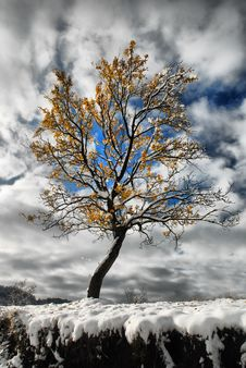 Free Winter Tree Stock Images - 17432354