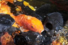 Free Fish Stock Image - 17433561