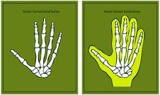 Free Vector Human Hand Royalty Free Stock Photo - 17433775