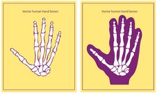 Free Vector Human Hand Royalty Free Stock Photos - 17433778