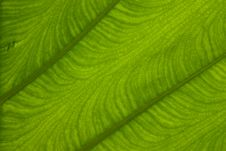 Free Texture On Leaf Stock Photography - 17434442