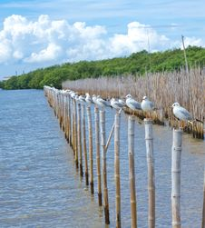 Free Seagull Standing On Bamboo Wood Stock Photos - 17434443