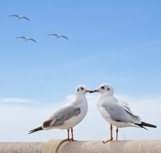 Free Seagull Standing On Concrete Stock Photo - 17434600