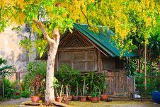 Free Gold Leaf Tree Stock Image - 17434951