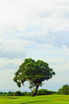Free Tree Stock Photos - 17435413