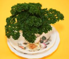 Free Parsley In A Cup Royalty Free Stock Photos - 17435848
