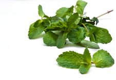 Free Mint Stock Photography - 17437112