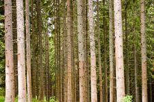 Free Tree Bark Royalty Free Stock Image - 17437336